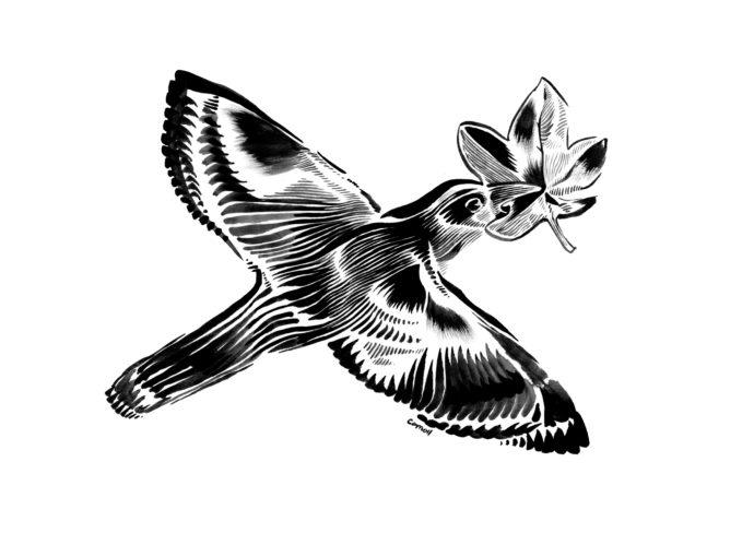 Fugl og blad